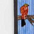 Avian Discourse by Marsha Rafter